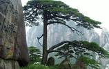 中國最古老的10顆大樹,最後一棵見證了華夏之路