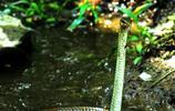 青蛇大戰青蛙