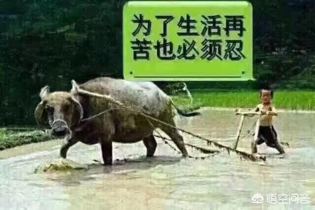 豬這一生的意義是什麼?