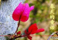春天的童話(愛情散文詩連載191)