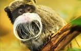 人類近親TOP10:猿唱歌狐猴跳舞,山魈最酷,冠軍是老鼠?