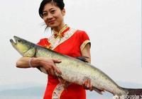丹江口水庫有多少魚類品種?