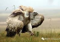 青海湖的鳥,果然是名不虛傳
