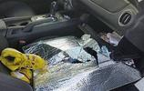 懷孕的浣熊闖進一輛轎車,在車後座生下浣熊寶寶