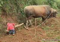 寶媽送4歲兒子到農村外婆家,一個星期後去接寶寶,讓人笑噴了
