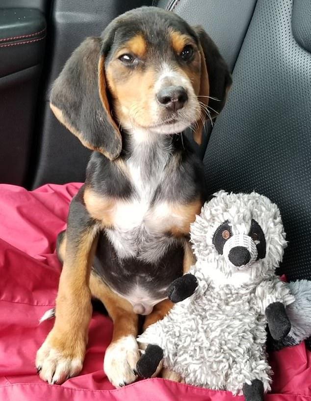 小狗被丟在樹林,被海軍陸戰隊的撿了,塞進包裡帶去上班