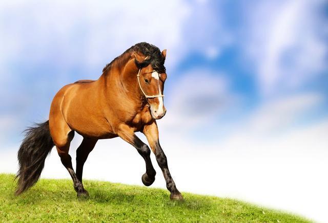 詩詞欣賞丨一匹馬