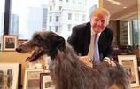 領導人和動物相處:普京被撲倒,卡梅倫抱豬,奧巴馬最可愛!