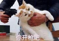 """網紅貓""""樓樓""""表情包,你都收藏了嗎?"""