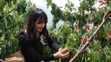 農村種植這幾種水果,也能在家裡創業掙大錢!