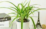 居家必備綠植盆栽,給你清新舒適的居家環境,還能淨化空氣