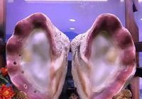海洋世界有機寶石,你不知道的美!