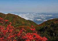 大圍山上杜鵑紅