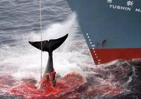 遠古時期只有獨木舟,怎麼捕捉鯨魚?這種方法太智慧了