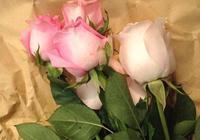 花店買的鮮花月季也能插活?簡單的扦插方法,3步就能生根發芽!