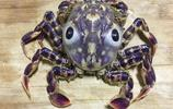 威武的螃蟹,不知道叫什麼名