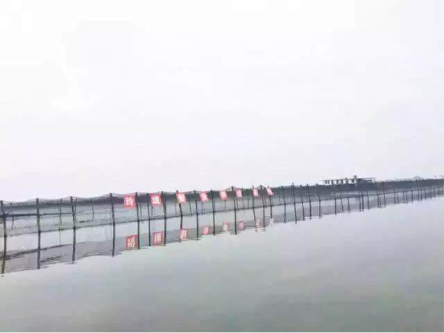 23日,陽澄湖開湖了!