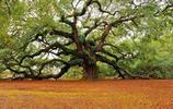 全球最美的10棵樹,中國只有1棵,美國卻有5棵