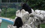 成都第一動物園——成都動物園