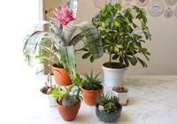 給植物選擇合適的花盆,這幾點經驗需要聽一聽