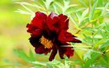 花卉攝影:牡丹花爭奇鬥豔,牡丹和芍藥有何區別,您分得清嗎