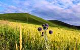 攝影圖集:豐寧壩上草原