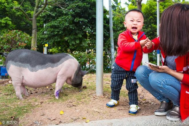 """寵物豬被遺棄民警亭成網紅,會自己過馬路,市民親貼稱為""""警豬"""""""