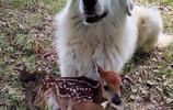 這些超萌照片證明:狗狗果然是世界上最可愛動物之一。信不信由你