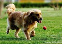 讓孩子和狗狗互動的小遊戲