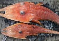 漁民在海里撈到奇怪的海洋生物 這是魚還是蝦?漁民都分不清