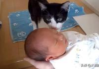 鏟屎官帶寶寶回家,貓咪表現得異常淡定,貓:這麼快就又來一個?
