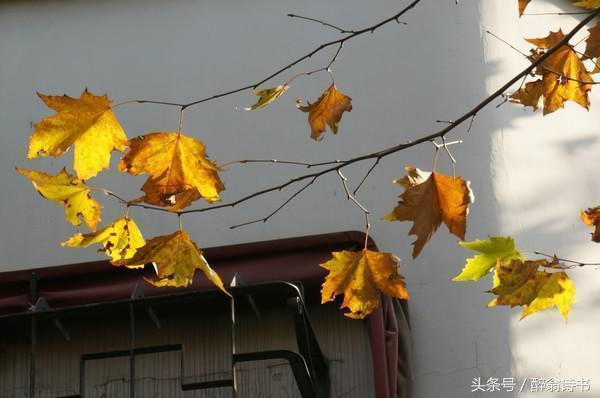 《七絕 · 苦寒來》文/江南居士