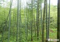種毛竹施什麼肥好?