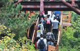 秋意濃,楓葉紅!濟南南部山區遊人如織