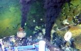 """""""蛟龍號""""鏡頭下的深海生物,多數是""""未知""""生物"""