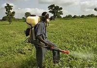 從中非農藥貿易數據看加納農藥市場潛力