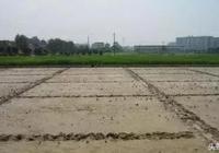 水稻直播田除草劑丙苄使用介紹及防除注意事項