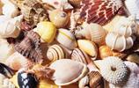 自然風光:美麗的雕塑海螺
