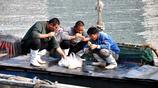 實拍 青島職業漁民 海鮮敞開吃 月薪過萬 網友道:寧上山 莫下海