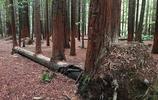 連科學都解釋不了的事情,這些樹木真的是千奇百怪