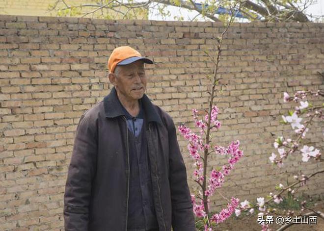 神奇!農村八旬大爺院落裡一株桃樹竟然長出13棵桃樹,似孔雀開屏