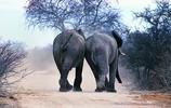 動物世界:大象王國