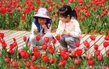 春天的故事:三峽宜昌,小溪塔森林公園花兒美,遊客拍照顏值高