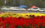 河南開封第36屆菊花文化節開幕,吸引大批遊客前來觀賞