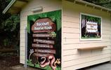 小偷潛入動物保護區 偷走大量爬行動物