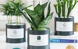 虎皮蘭鐵罐ins植物盆栽仙人掌室內蘆薈盆栽防輻射豆瓣綠多肉植