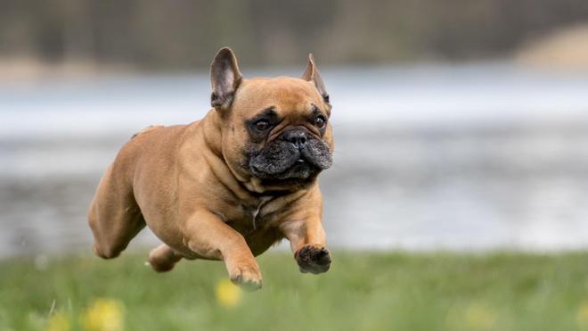 動物圖集:動物的奔跑