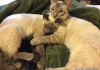 """流浪貓產下5只小貓,旁邊還有隻公貓陪伴,這對""""貓夫妻""""很恩愛"""