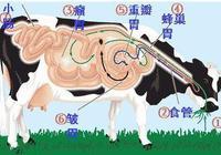為什麼動物都不需要擦屁股,人類卻因為擦屁股而消耗大量紙張?
