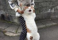 家貓趁主人不注意溜了出去,沒多久就被抓了回來,可這表情~